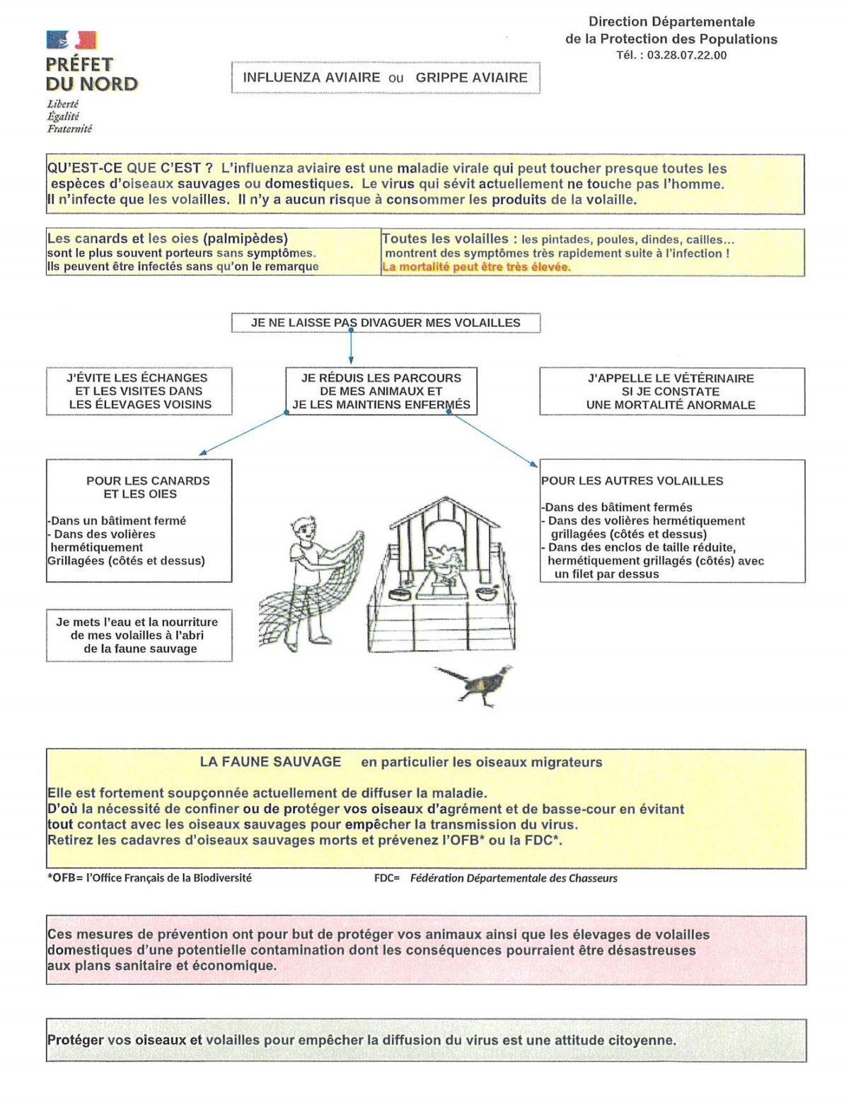 Risque élevé de propagation de la grippe aviaire